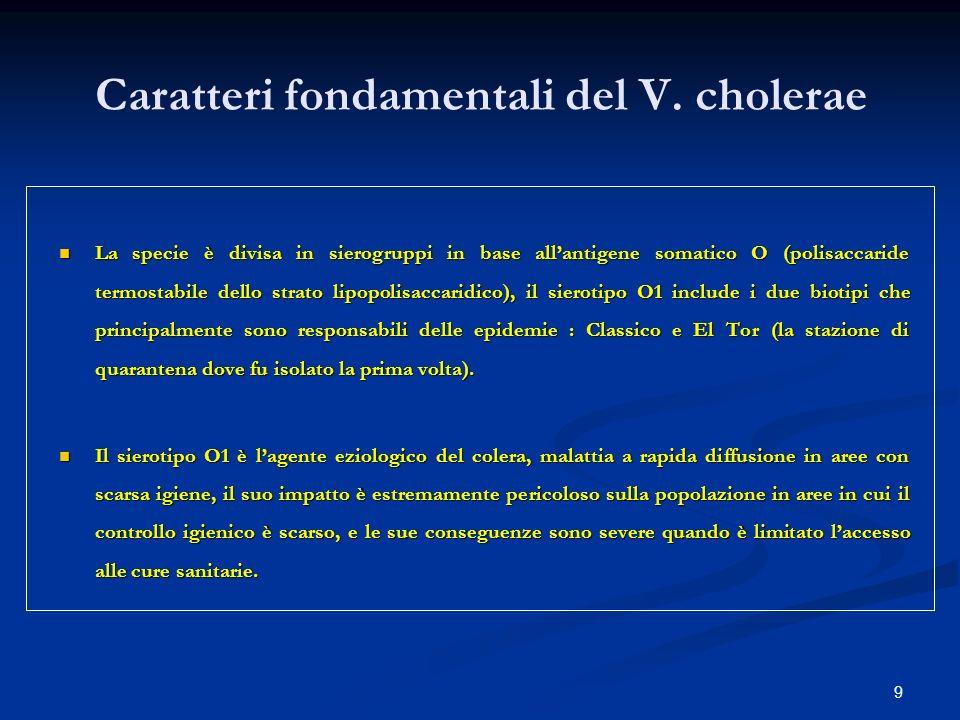 9 Caratteri fondamentali del V. cholerae La specie è divisa in sierogruppi in base allantigene somatico O (polisaccaride termostabile dello strato lip