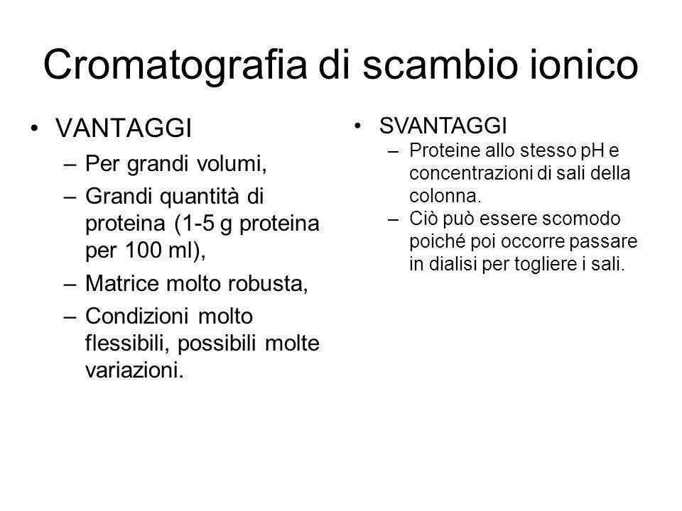 Cromatografia di scambio ionico VANTAGGI –Per grandi volumi, –Grandi quantità di proteina (1-5 g proteina per 100 ml), –Matrice molto robusta, –Condizioni molto flessibili, possibili molte variazioni.