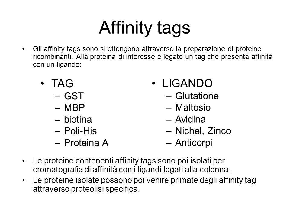 Affinity tags Gli affinity tags sono si ottengono attraverso la preparazione di proteine ricombinanti. Alla proteina di interesse è legato un tag che