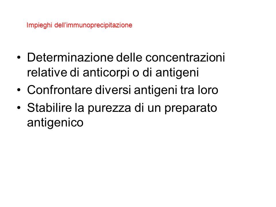 Determinazione delle concentrazioni relative di anticorpi o di antigeni Confrontare diversi antigeni tra loro Stabilire la purezza di un preparato ant