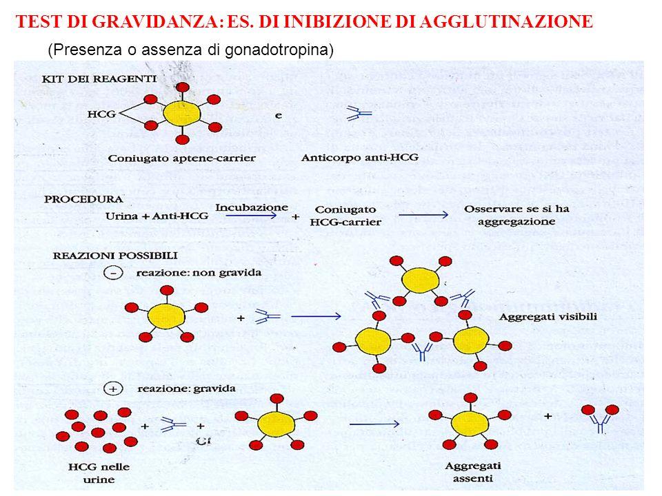 TEST DI GRAVIDANZA: ES. DI INIBIZIONE DI AGGLUTINAZIONE (Presenza o assenza di gonadotropina)