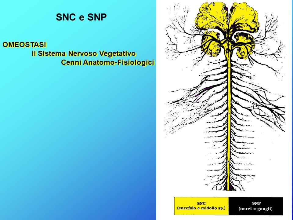 OMEOSTASI il Sistema Nervoso Vegetativo Cenni Anatomo-Fisiologici OMEOSTASI il Sistema Nervoso Vegetativo Cenni Anatomo-Fisiologici SNC e SNP