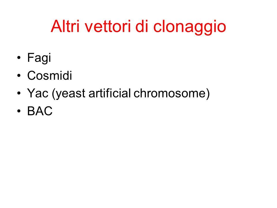 Altri vettori di clonaggio Fagi Cosmidi Yac (yeast artificial chromosome) BAC