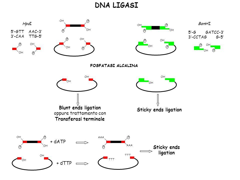 Vettori di clonaggio Plasmidi Fagi Cosmidi Yac Bac