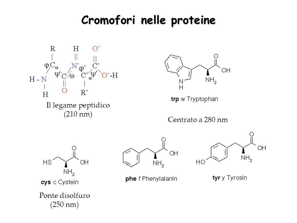 Cromofori nelle proteine Il legame peptidico (210 nm) Ponte disolfuro (250 nm) Centrato a 280 nm