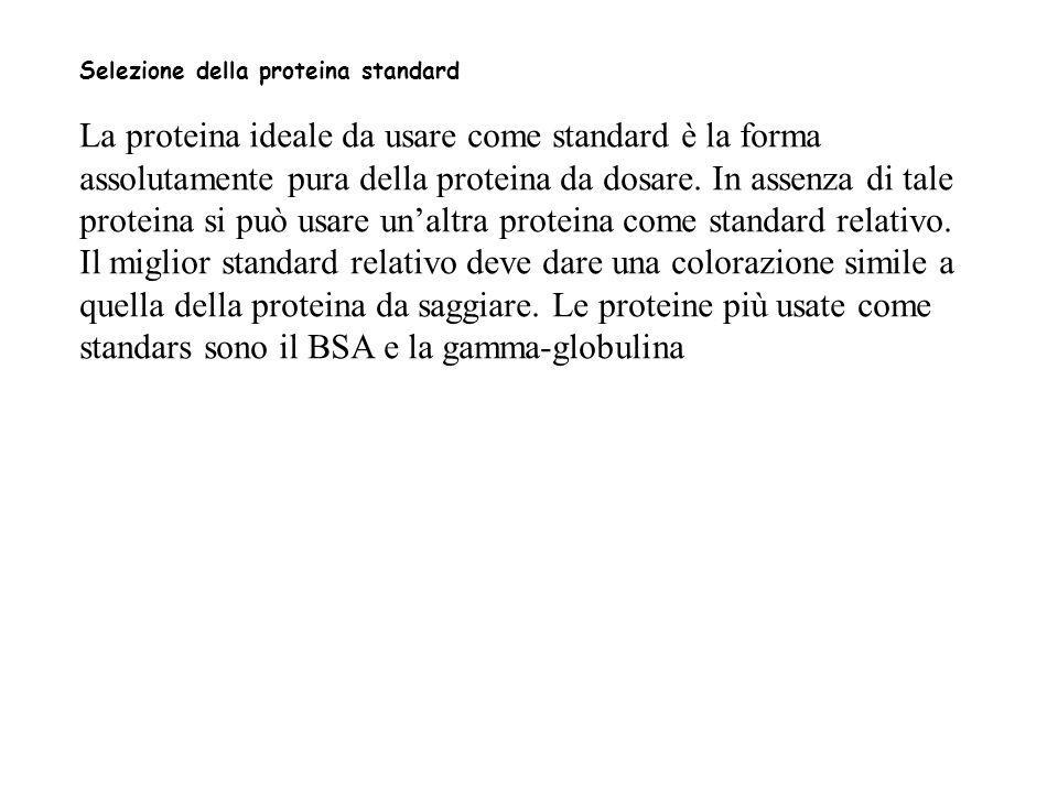 Selezione della proteina standard La proteina ideale da usare come standard è la forma assolutamente pura della proteina da dosare.