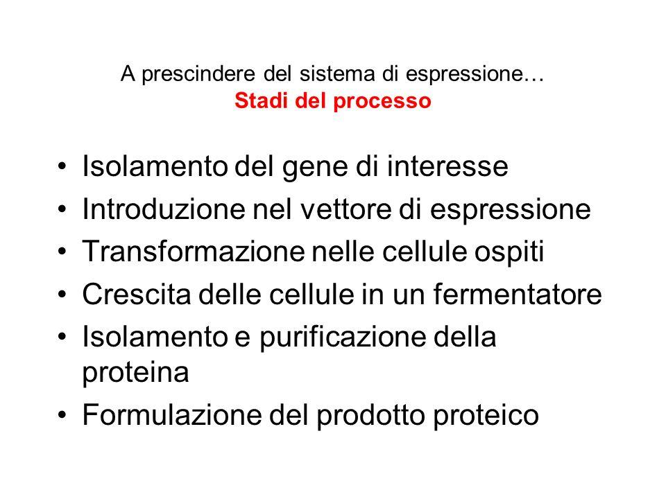 A prescindere del sistema di espressione… Stadi del processo Isolamento del gene di interesse Introduzione nel vettore di espressione Transformazione