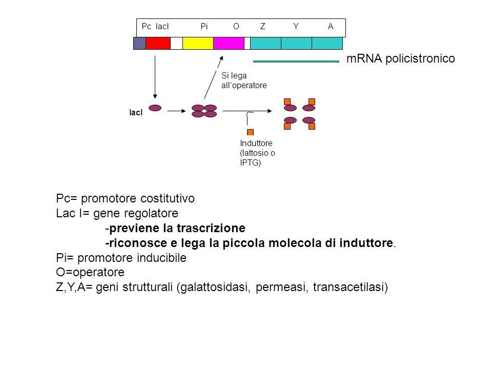 lacI Induttore (lattosio o IPTG) Si lega alloperatore Pc lacI Pi O Z Y A Pc= promotore costitutivo Lac I= gene regolatore -previene la trascrizione -r