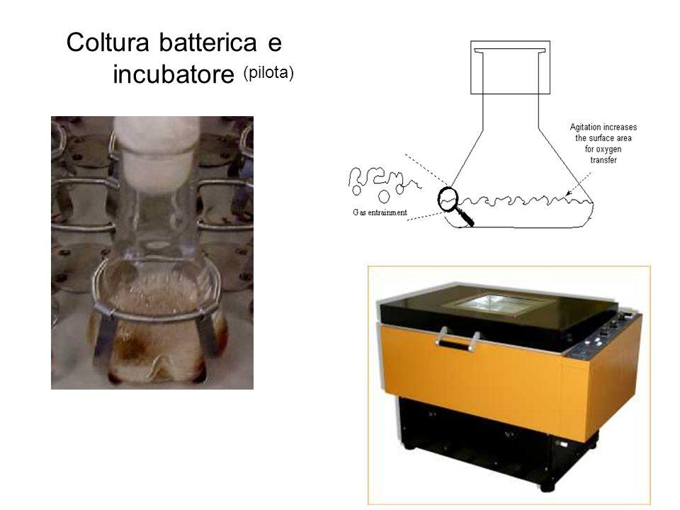 Coltura batterica e incubatore (pilota)