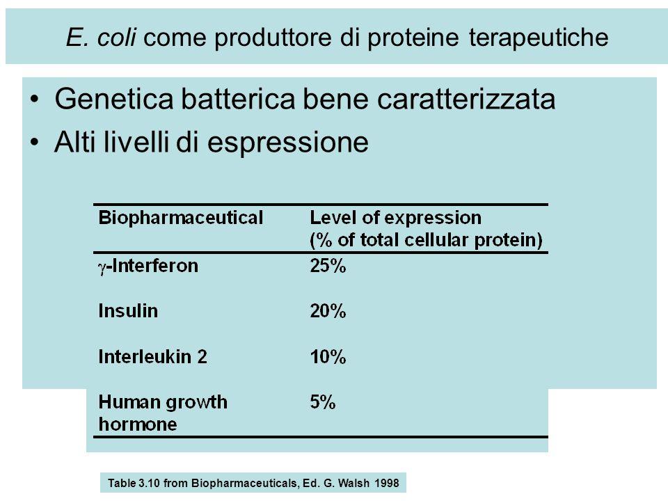 E. coli come produttore di proteine terapeutiche Genetica batterica bene caratterizzata Alti livelli di espressione Cells grow rapidly on simple and i