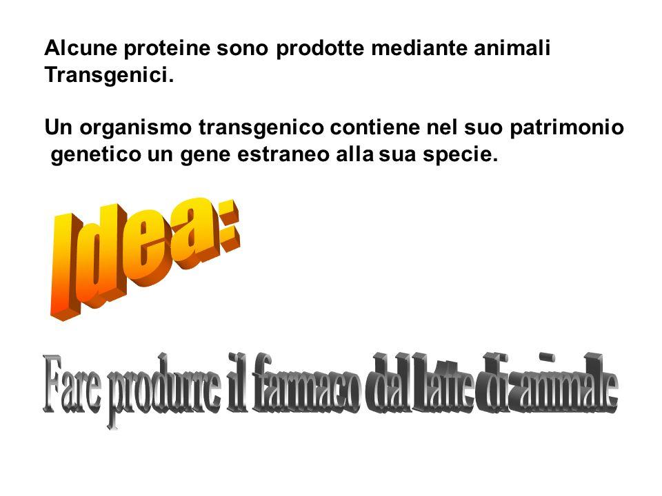 Alcune proteine sono prodotte mediante animali Transgenici. Un organismo transgenico contiene nel suo patrimonio genetico un gene estraneo alla sua sp