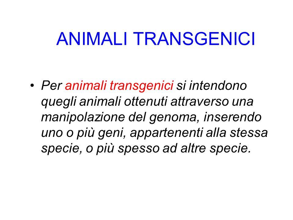 ANIMALI TRANSGENICI Per animali transgenici si intendono quegli animali ottenuti attraverso una manipolazione del genoma, inserendo uno o più geni, ap
