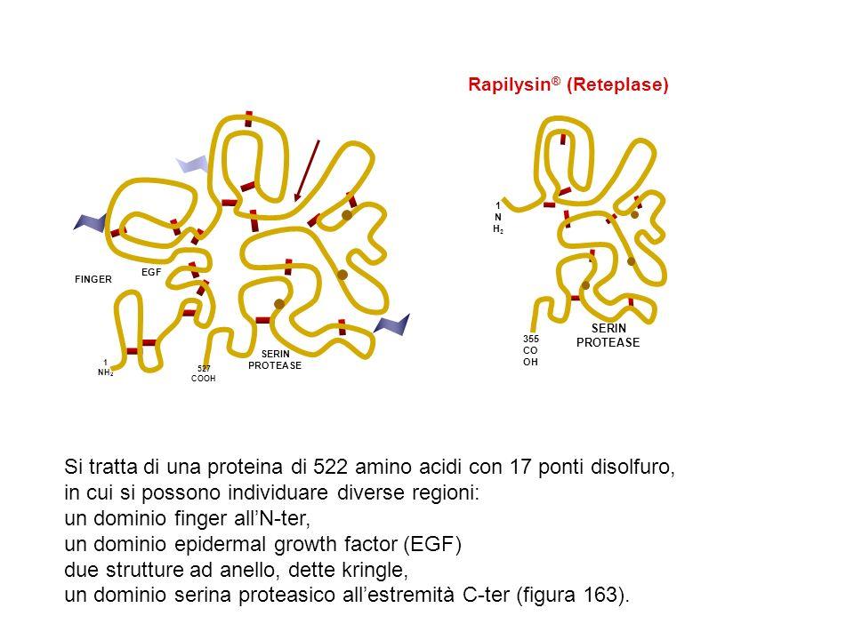 FINGER EGF SERIN PROTEASE 1 NH 2 527 COOH SERIN PROTEASE 1NH21NH2 355 CO OH Rapilysin ® (Reteplase) Si tratta di una proteina di 522 amino acidi con 1