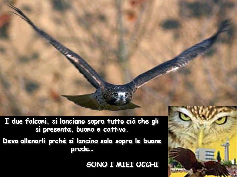 SONO I MIEI OCCHI SONO I MIEI OCCHI I due falconi, si lanciano sopra tutto ciò che gli si presenta, buono e cattivo.