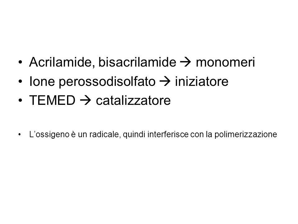 Acrilamide, bisacrilamide monomeri Ione perossodisolfato iniziatore TEMED catalizzatore Lossigeno è un radicale, quindi interferisce con la polimerizz