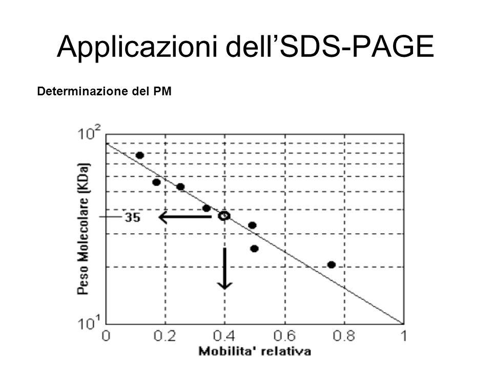 Applicazioni dellSDS-PAGE Determinazione del PM