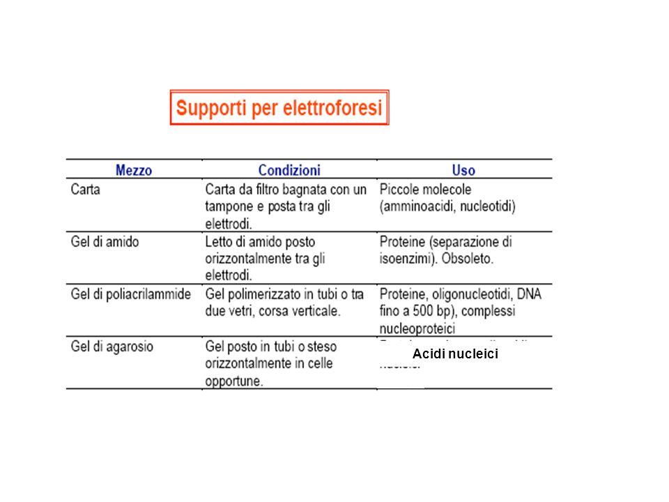 Applicazioni della SDS-PAGE Purezza del campione Determinazione del PM Western blot Purificazione della proteina