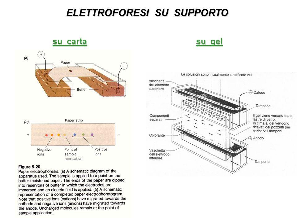ELETTROFORESI SU SUPPORTO su carta su gel