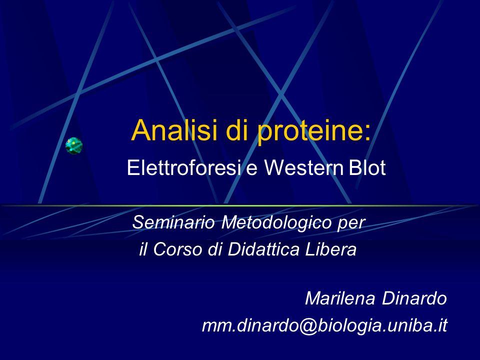 SDS-Polyacrylamide Gel Electrophoresis (SDS-PAGE) SDS (Sodio Dodecil Solfato) Solubilizza e denatura le proteine Aggiunge cariche negative alle proteine O S O O O - CH 2 CH 3 SDS