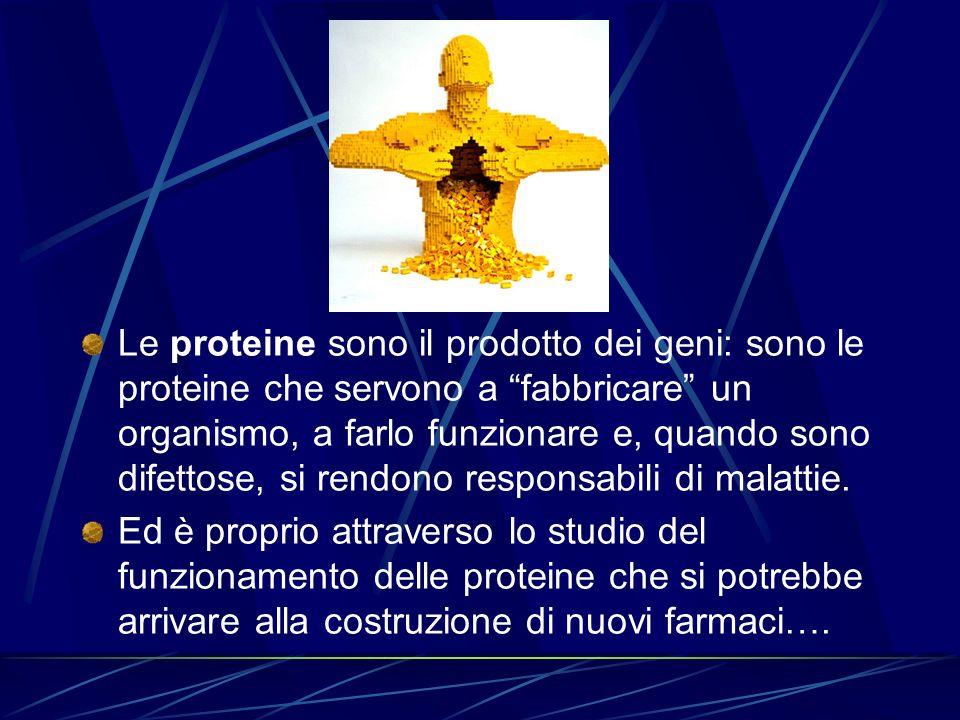 Le proteine sono il prodotto dei geni: sono le proteine che servono a fabbricare un organismo, a farlo funzionare e, quando sono difettose, si rendono