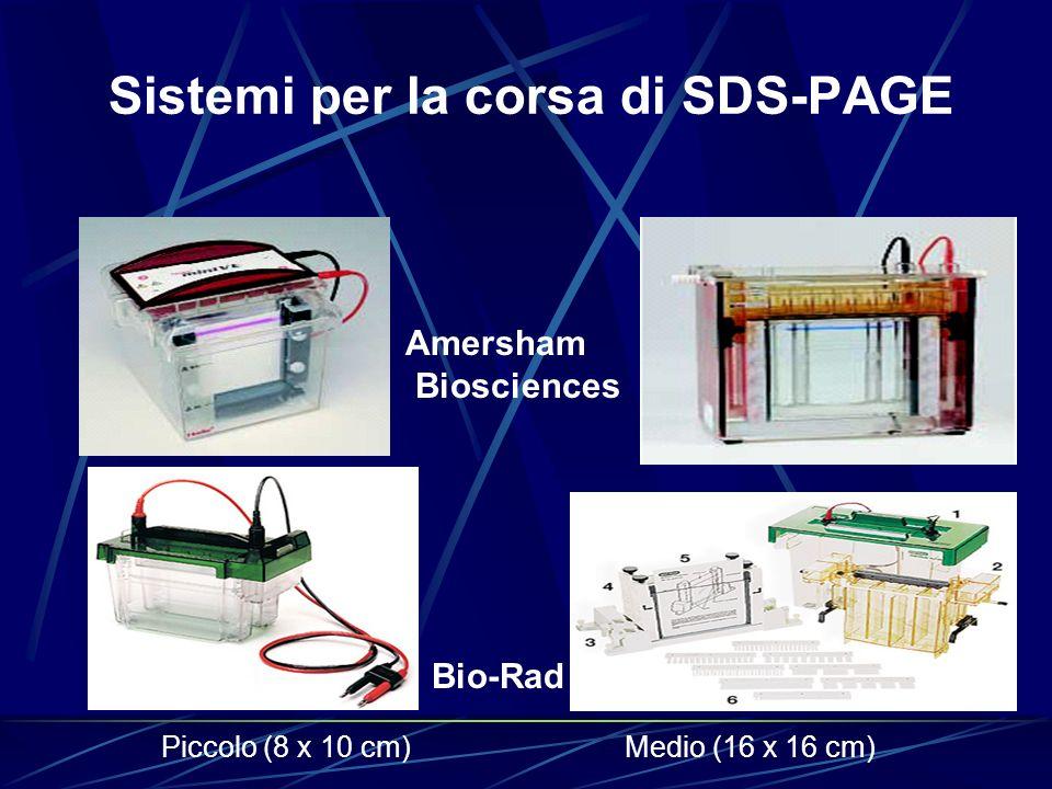 Sistemi per la corsa di SDS-PAGE Amersham Biosciences Medio (16 x 16 cm)Piccolo (8 x 10 cm) Bio-Rad