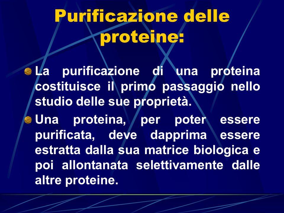 Purificazione delle proteine: La purificazione di una proteina costituisce il primo passaggio nello studio delle sue proprietà. Una proteina, per pote