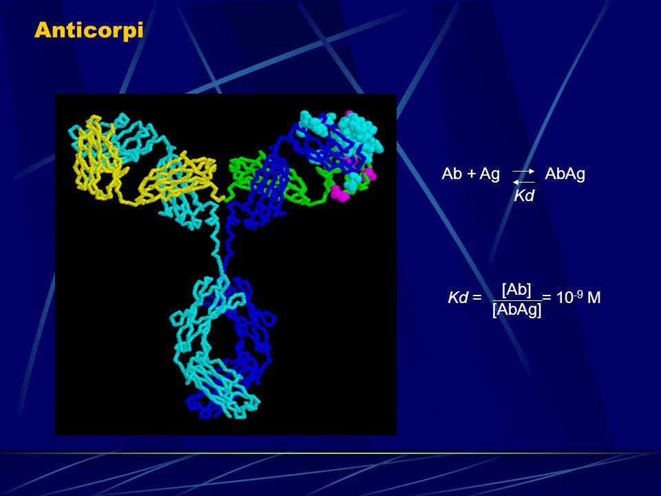 Anticorpi Ab + Ag AbAg Kd Kd = = 10 -9 M [Ab] [AbAg]
