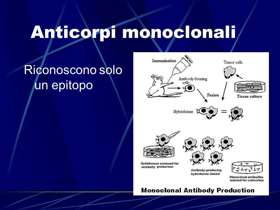 Anticorpi monoclonali Riconoscono solo un epitopo
