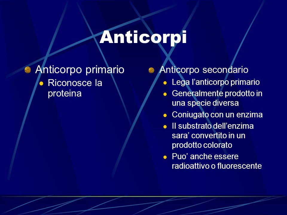 Anticorpi Anticorpo primario Riconosce la proteina Anticorpo secondario Lega lanticorpo primario Generalmente prodotto in una specie diversa Coniugato