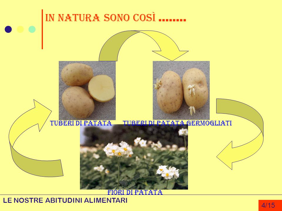In natura sono così........ LE NOSTRE ABITUDINI ALIMENTARI 4/15 Fiori di Patata Tuberi di PatataTuberi di Patata germogliati