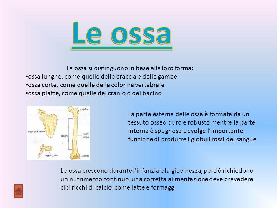 Le ossa si distinguono in base alla loro forma: ossa lunghe, come quelle delle braccia e delle gambe ossa corte, come quelle della colonna vertebrale ossa piatte, come quelle del cranio o del bacino La parte esterna delle ossa è formata da un tessuto osseo duro e robusto mentre la parte interna è spugnosa e svolge limportante funzione di produrre i globuli rossi del sangue Le ossa crescono durante linfanzia e la giovinezza, perciò richiedono un nutrimento continuo: una corretta alimentazione deve prevedere cibi ricchi di calcio, come latte e formaggi