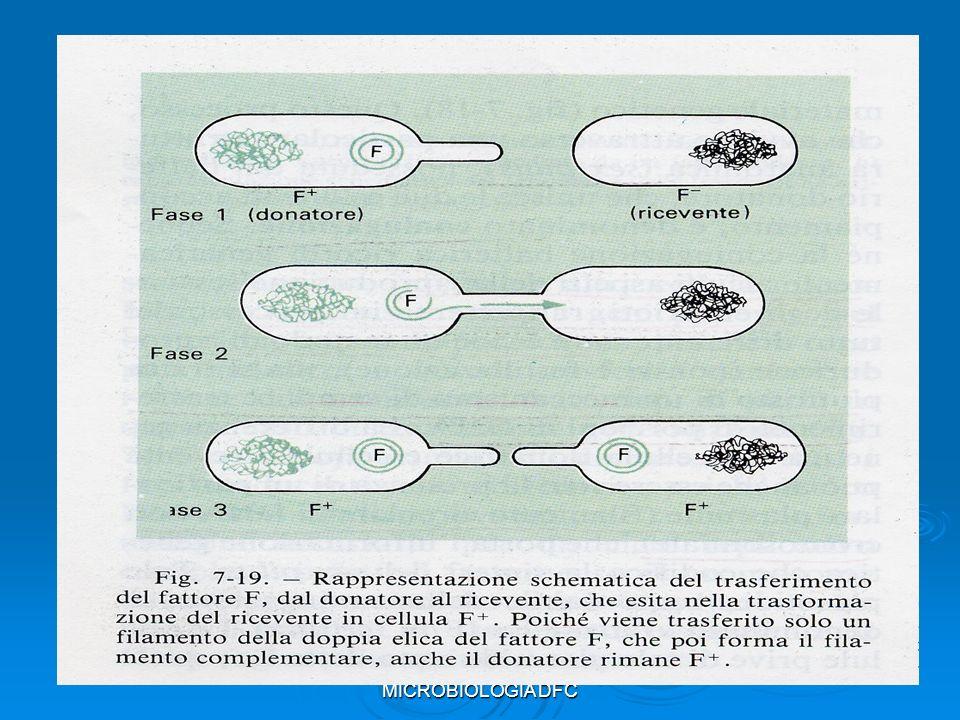 LABORATORIO DI MICROBIOLOGIA DFC
