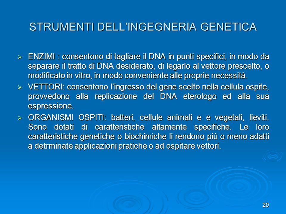 20 STRUMENTI DELLINGEGNERIA GENETICA ENZIMI : consentono di tagliare il DNA in punti specifici, in modo da separare il tratto di DNA desiderato, di le