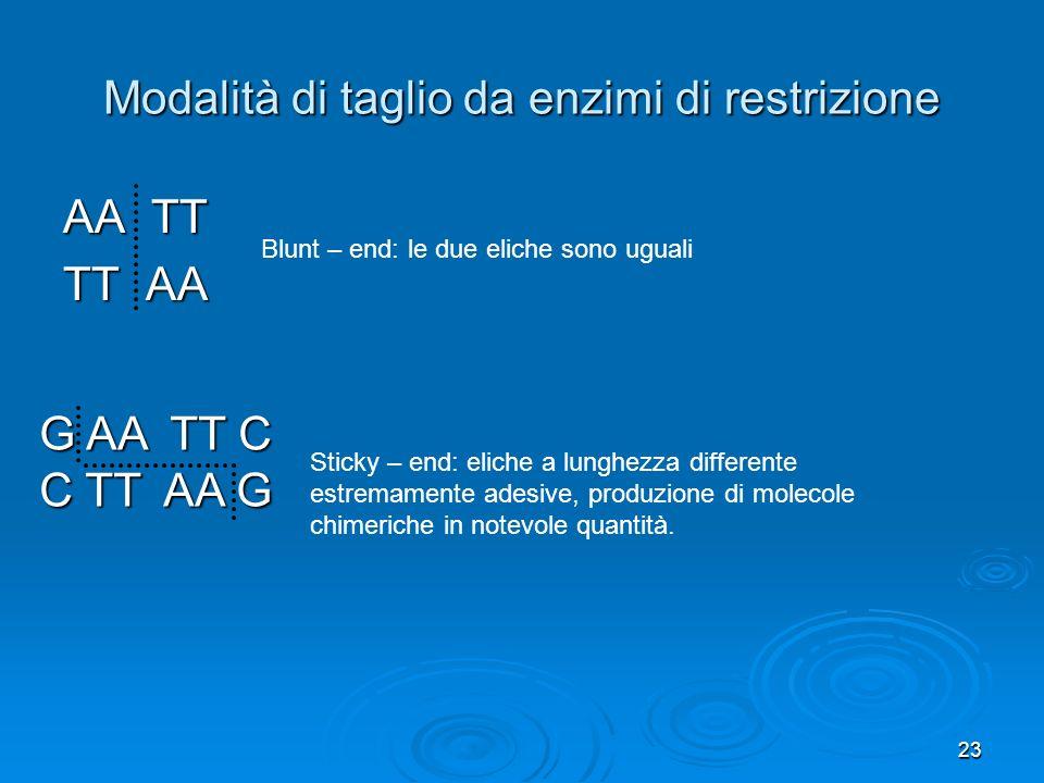 23 Modalità di taglio da enzimi di restrizione AA TT TT AA Blunt – end: le due eliche sono uguali G AA TT C C TT AA G Sticky – end: eliche a lunghezza