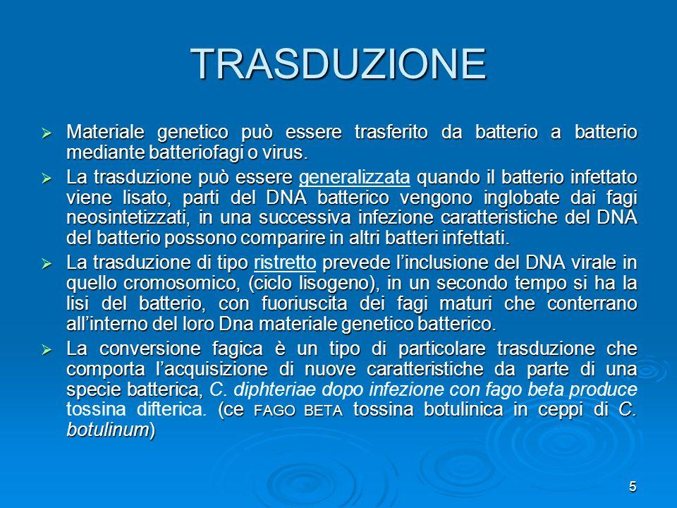 5 TRASDUZIONE Materiale genetico può essere trasferito da batterio a batterio mediante batteriofagi o virus. Materiale genetico può essere trasferito