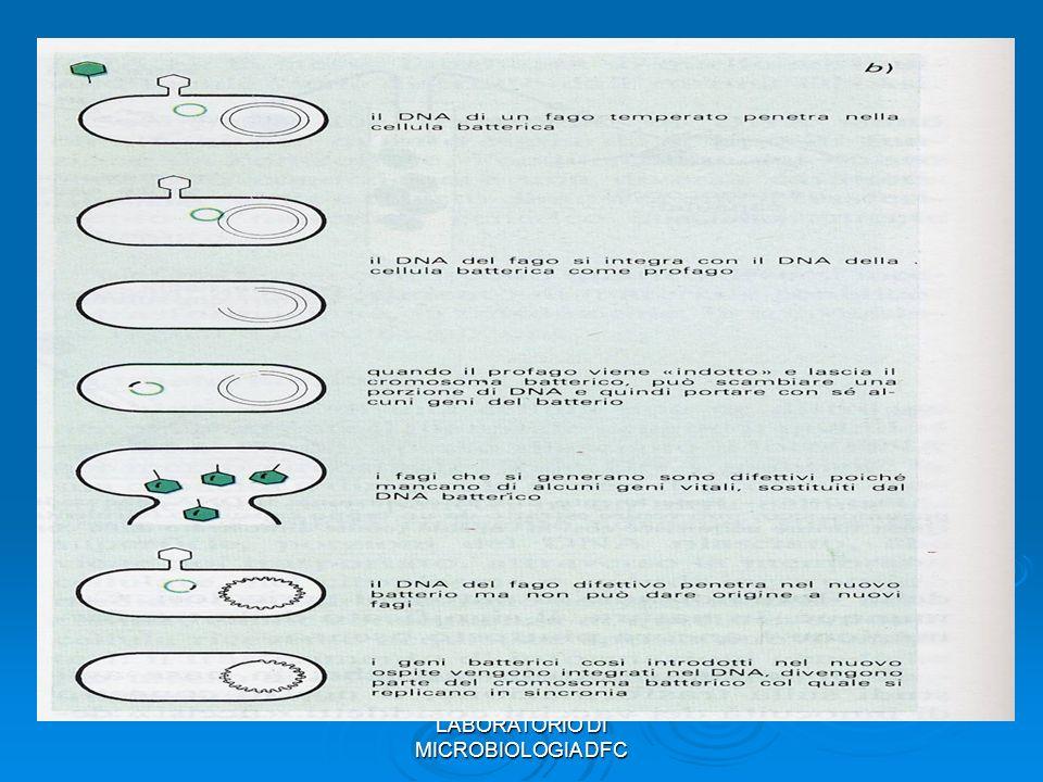 29 Tipi di vettore Elemento genetico extracromosomico (cosmide o plasmide) Elemento genetico extracromosomico (cosmide o plasmide) VIRUS ANIMALI VIRUS ANIMALI FAGI FAGI