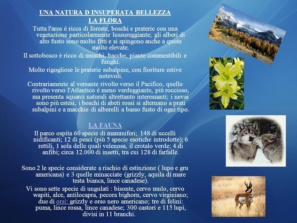 UNA NATURA D INSUPERATA BELLEZZA LA FLORA Tutta l'area è ricca di foreste, boschi e praterie con una vegetazione particolarmente lussureggiante; gli a