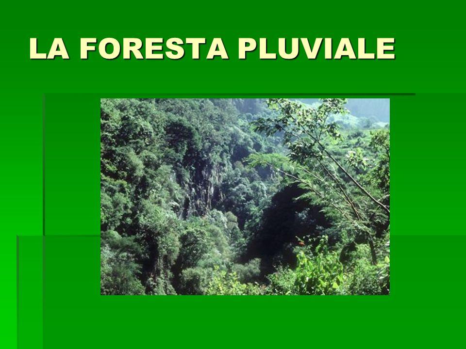 LA FORESTA PLUVIALE