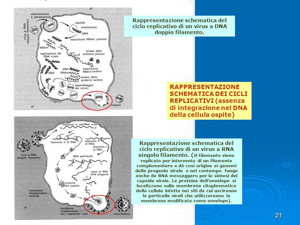 21 RAPPRESENTAZIONE SCHEMATICA DEI CICLI REPLICATIVI (assenza di integrazione nel DNA della cellula ospite) Rappresentazione schematica del ciclo repl