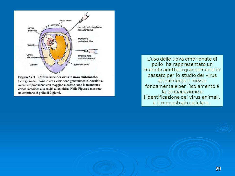 26 Luso delle uova embrionate di pollo ha rappresentato un metodo adottato grandemente in passato per lo studio dei virus attualmente il mezzo fondame