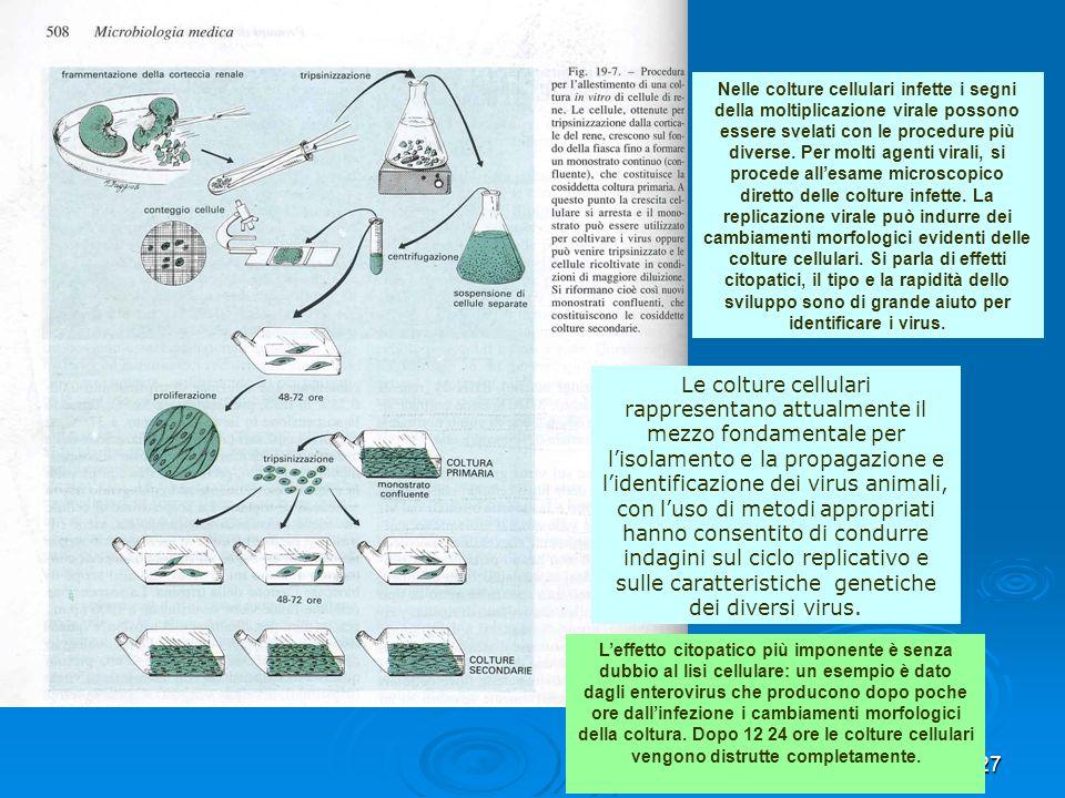 27 Le colture cellulari rappresentano attualmente il mezzo fondamentale per lisolamento e la propagazione e lidentificazione dei virus animali, con lu