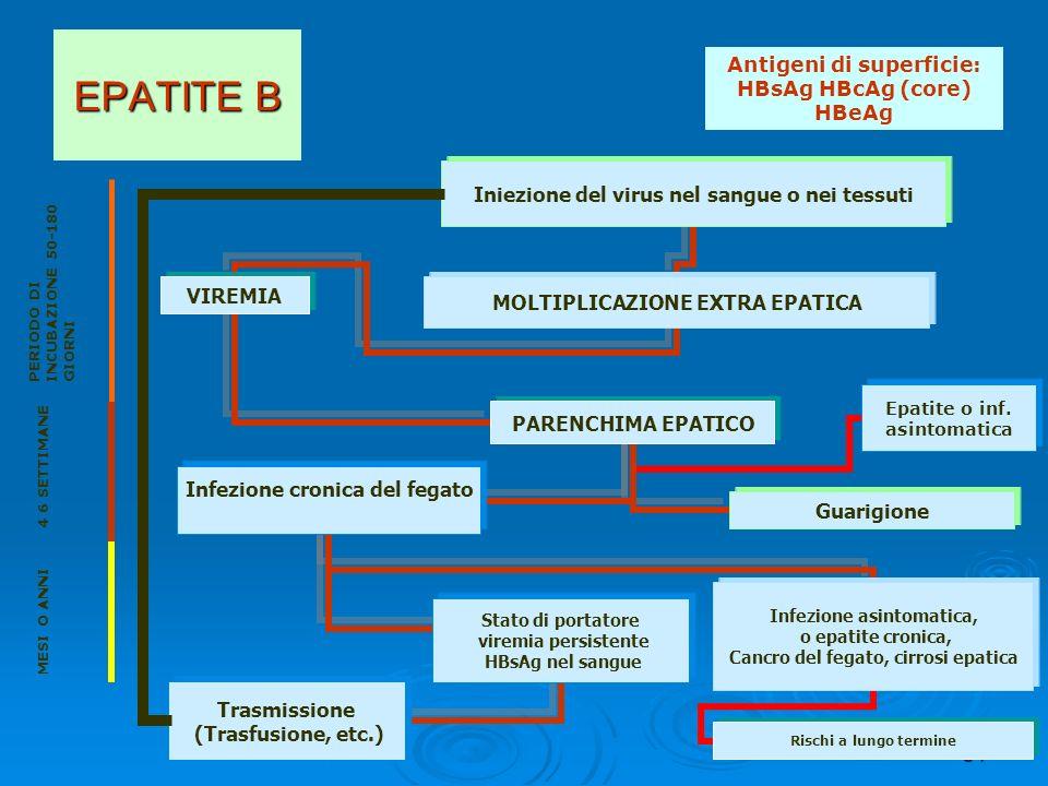 34 EPATITE B PERIODO DI INCUBAZIONE 50-180 GIORNI MESI O ANNI 4 6 SETTIMANE Antigeni di superficie: HBsAg HBcAg (core) HBeAg