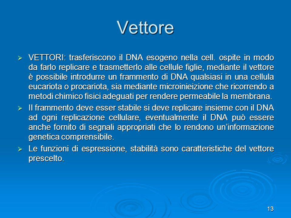 13 VETTORI: trasferiscono il DNA esogeno nella cell. ospite in modo da farlo replicare e trasmetterlo alle cellule figlie, mediante il vettore è possi
