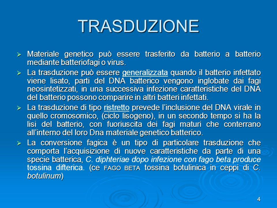 4 TRASDUZIONE Materiale genetico può essere trasferito da batterio a batterio mediante batteriofagi o virus. Materiale genetico può essere trasferito