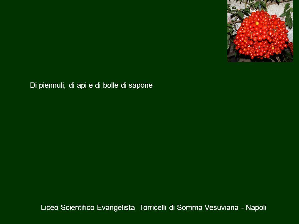 Di piennuli, di api e di bolle di sapone Liceo Scientifico Evangelista Torricelli di Somma Vesuviana - Napoli