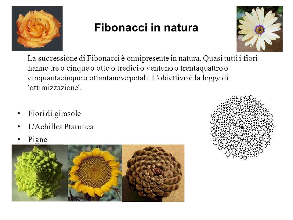 Fibonacci in natura La successione di Fibonacci è onnipresente in natura. Quasi tutti i fiori hanno tre o cinque o otto o tredici o ventuno o trentaqu
