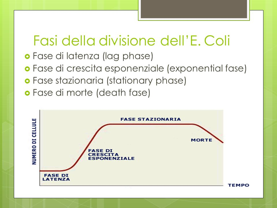 Fasi della divisione dellE. Coli Fase di latenza (lag phase) Fase di crescita esponenziale (exponential fase) Fase stazionaria (stationary phase) Fase