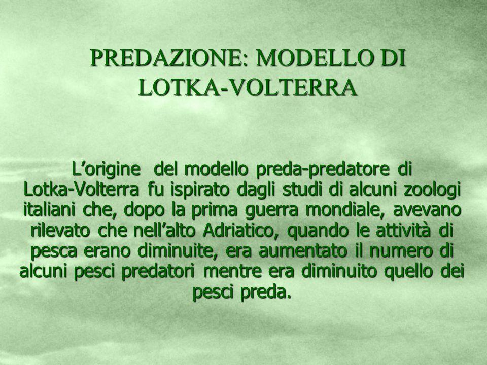 PREDAZIONE: MODELLO DI LOTKA-VOLTERRA Lorigine del modello preda-predatore di Lotka-Volterra fu ispirato dagli studi di alcuni zoologi italiani che, d