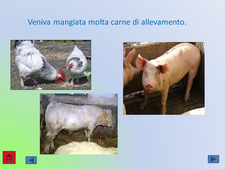 Veniva mangiata molta carne di allevamento.