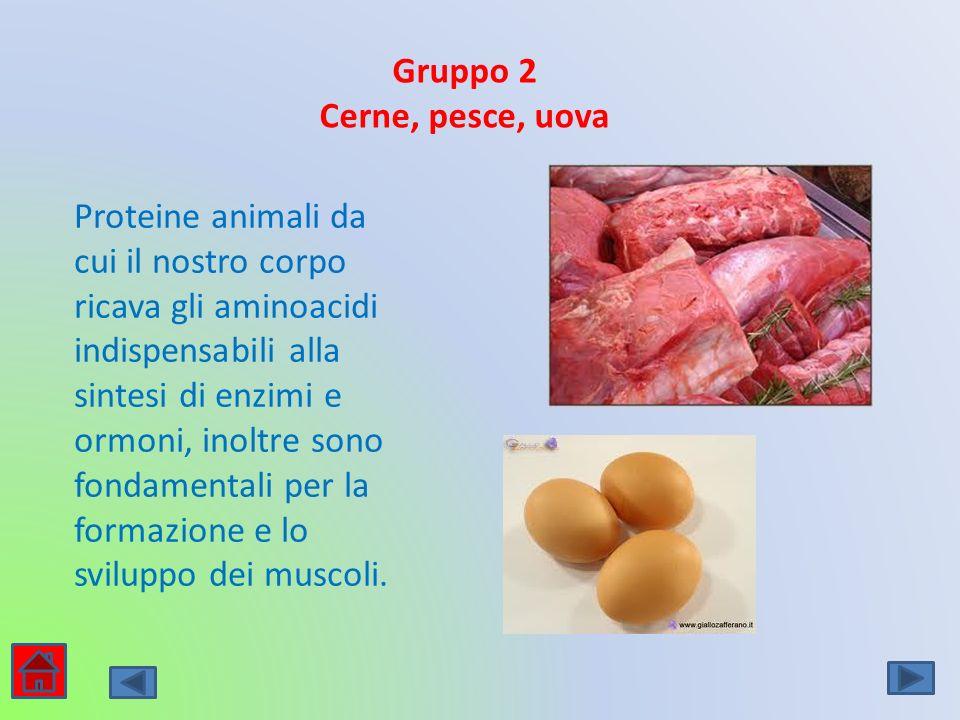 Gruppo 2 Cerne, pesce, uova Proteine animali da cui il nostro corpo ricava gli aminoacidi indispensabili alla sintesi di enzimi e ormoni, inoltre sono